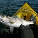 Kayak Bass Fishing | Perfect KBF Strategy Makes You A Perfect Kayak Angler